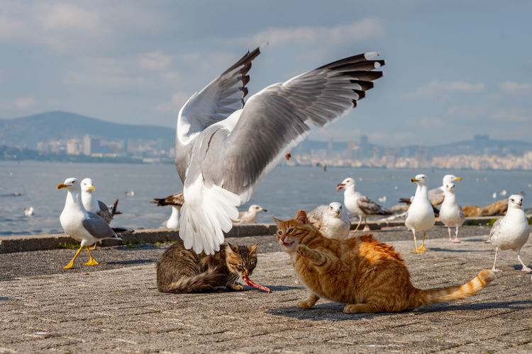 Seagulls with cats on promenade against sky