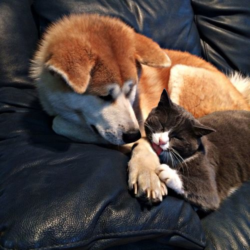 Love Is In The Air My Dog And Cat