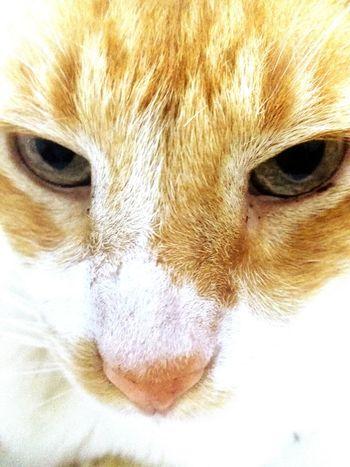 Uniqueness Amantes De los Gatos