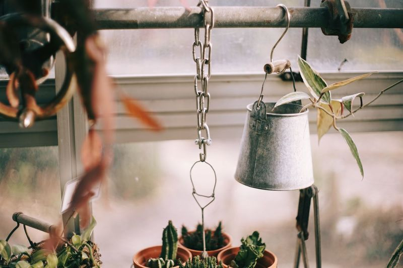 Close-up of potted plants hanging from window