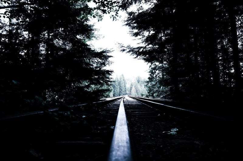 Tree Railroad Track Outdoors Nature Scenics Beauty In Nature PNW PNWonderland PNW At Its Finest Pnwlife Pnwcollective PNW Photography Pnw Paradise Valencia_urii