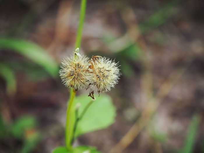 Close up of grass flower Grass Flower Head Thistle Leaf Social Issues Close-up Animal Themes Plant Plant Part Wildflower
