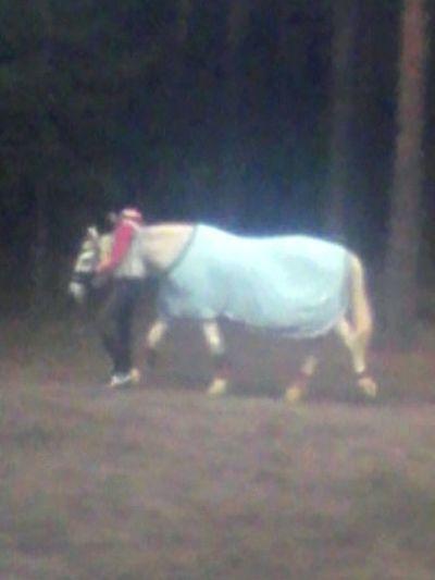 Мимишная лошадка 🐴🐎