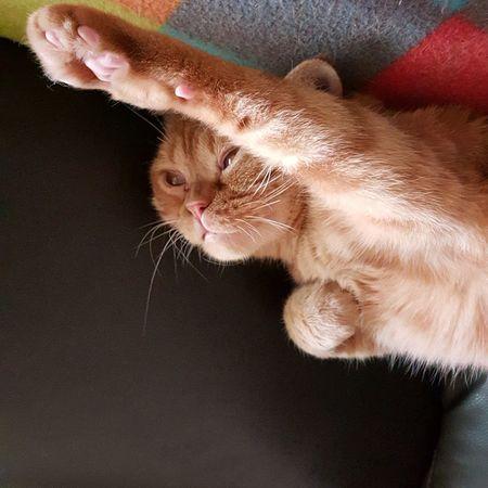 我要成為一個正向思考的人 ( 喵星人 ?!) EyeEmNewHere Focus 翻轉視界 Catboy Wish