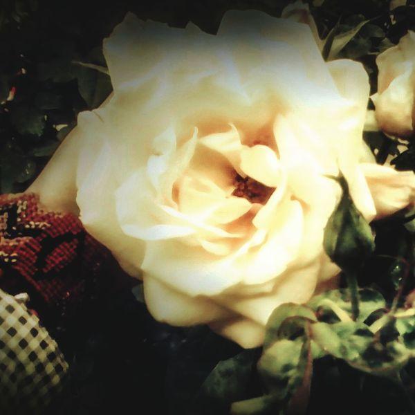 Practicando fotografia(amo las flores) First Eyeem Photo