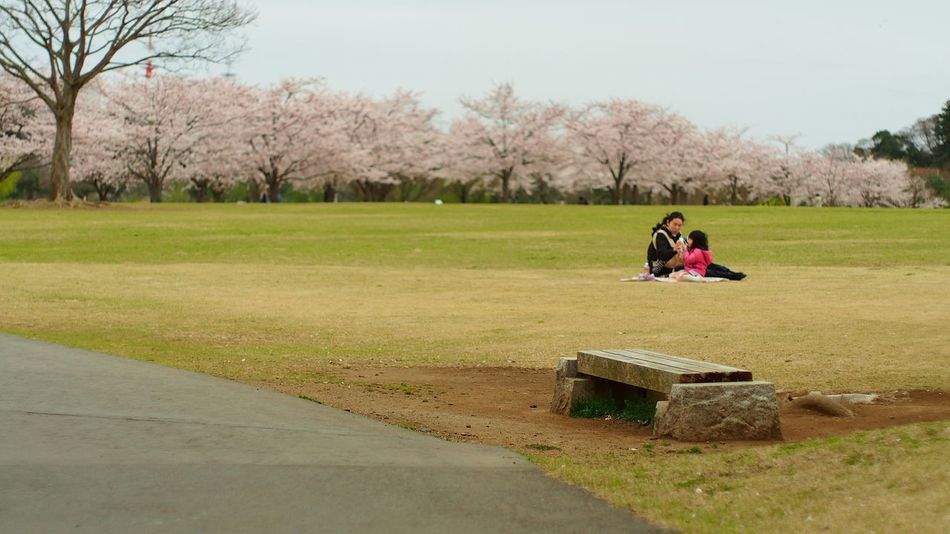 憩い Park Mito-shi Sakura2015 Photowalk Takumar Streamzoofamily Oldlens