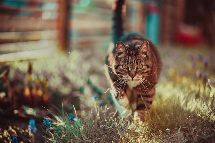 Cat Domestic Domestic Animals Domestic Cat Feline Mammal One Animal Pets