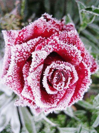 Nature On Your Doorstep kept Rose in deep freezer