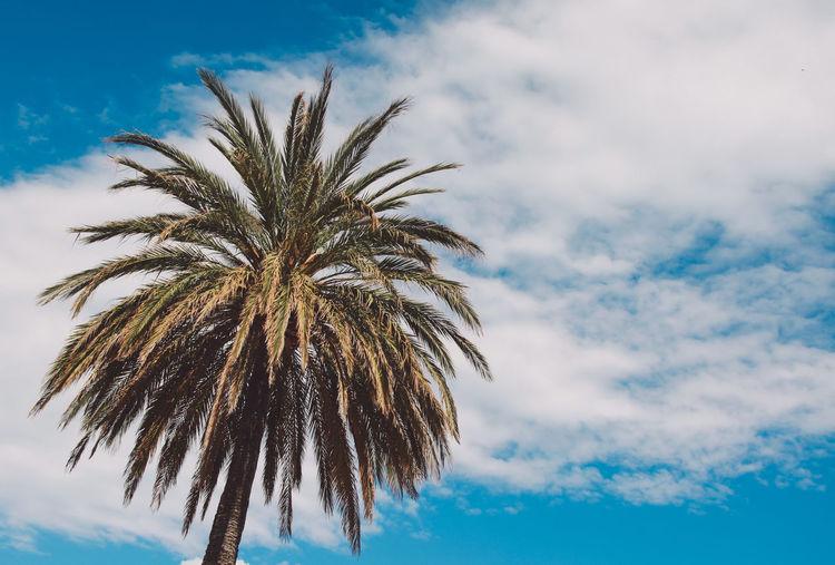 Majorca Mallorca Palma Palma De Mallorca SPAIN Beauty In Nature Cloud - Sky Day Growth Island Low Angle View Nature No People Outdoors Palm Tree Scenics Sky Spring Tree