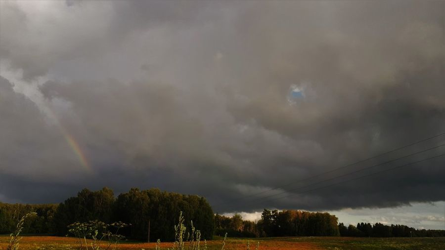 Trees on field against rainbow in sky