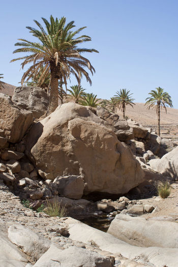 Palm trees on rock formation against sky