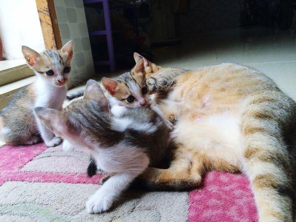 Everyday Joy Khodi♡ Mycat♥