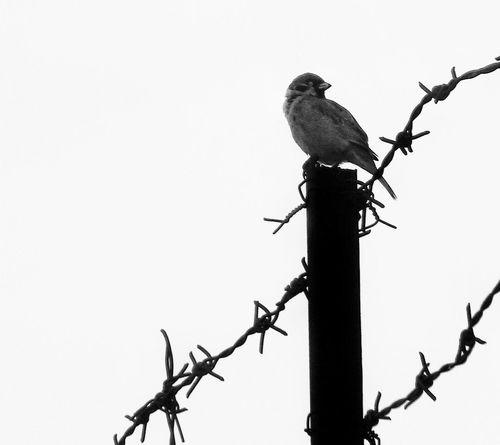 Blackandwhite Bird Contrast