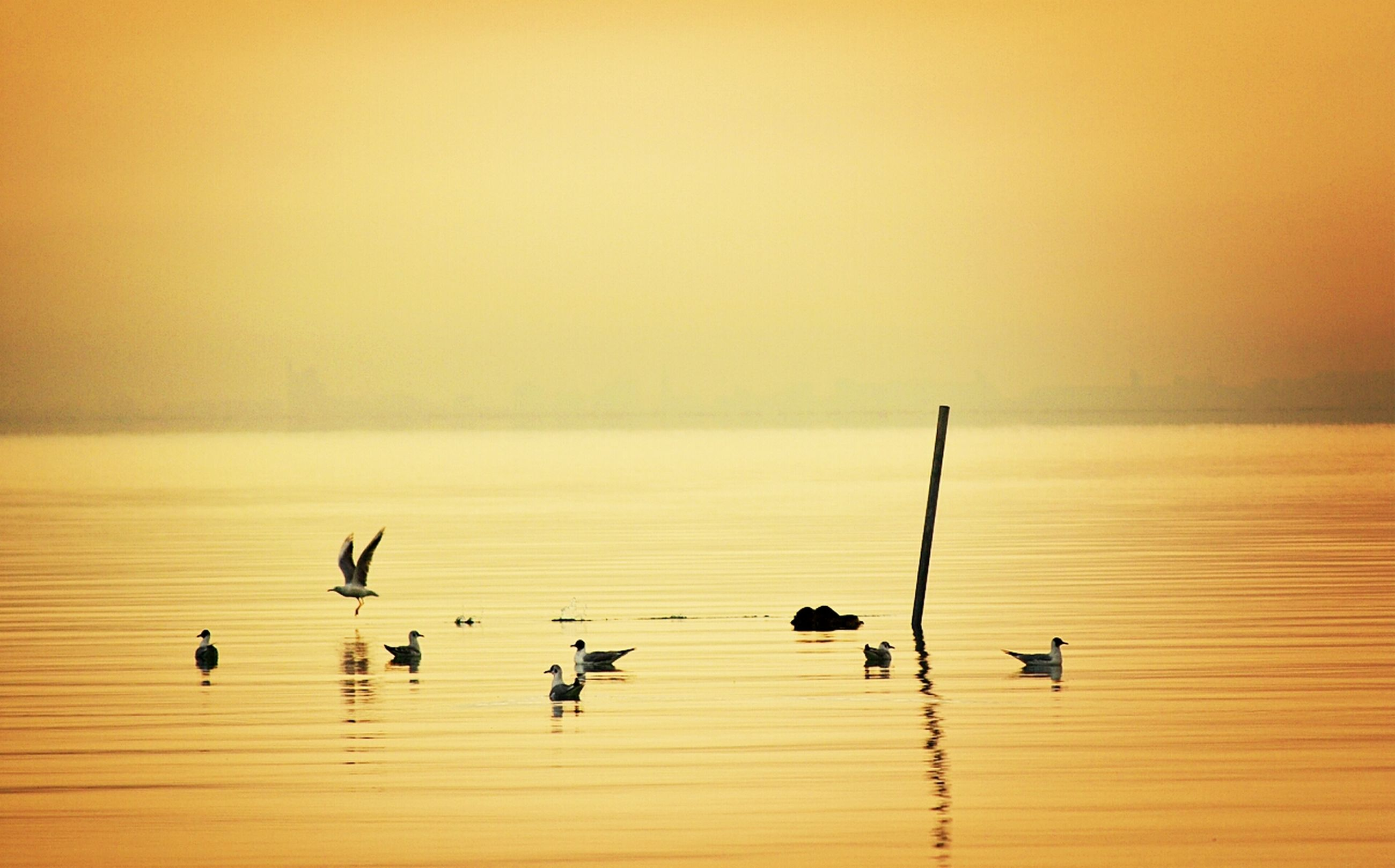 bird, sunset, water, animal themes, wildlife, animals in the wild, reflection, beauty in nature, orange color, flock of birds, tranquil scene, waterfront, tranquility, nature, sea, scenics, copy space, horizon over water, clear sky