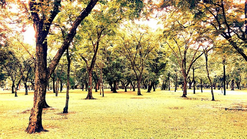 Park Nature In The Park Tree In The Park Tree Landscape View Landscape Photography View Photography Nature Nature View Park In The City Park In Thailand Beautiful Nature Beauty Of Nature Vintage Photography Vintage Yellow Tones