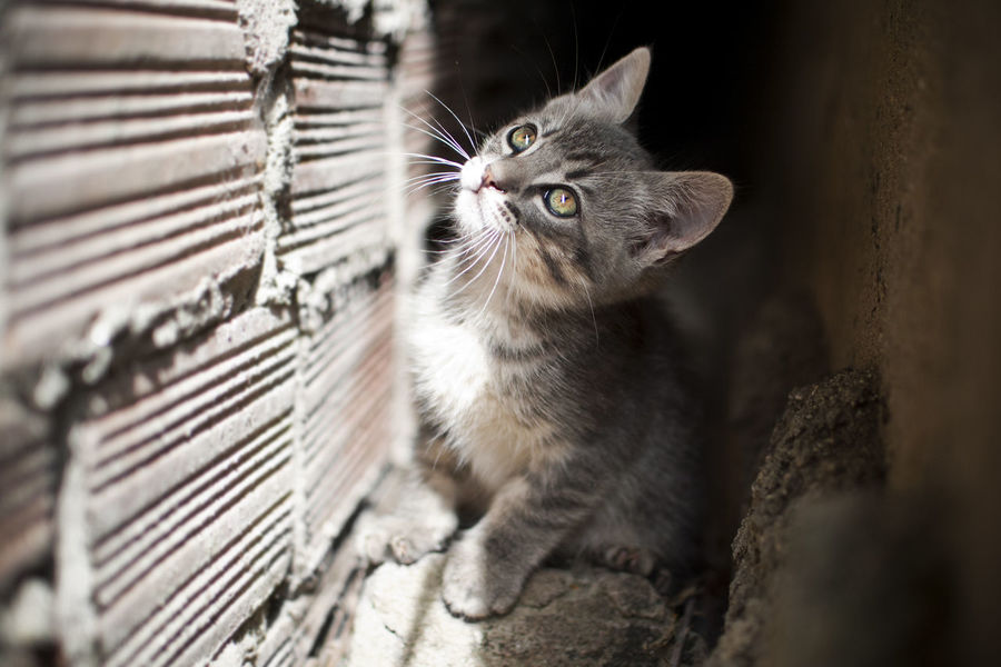Animal Themes Close-up Day Domestic Animals Domestic Cat Feline Indoors  Mammal No People One Animal Persian Cat  Pets Radiator