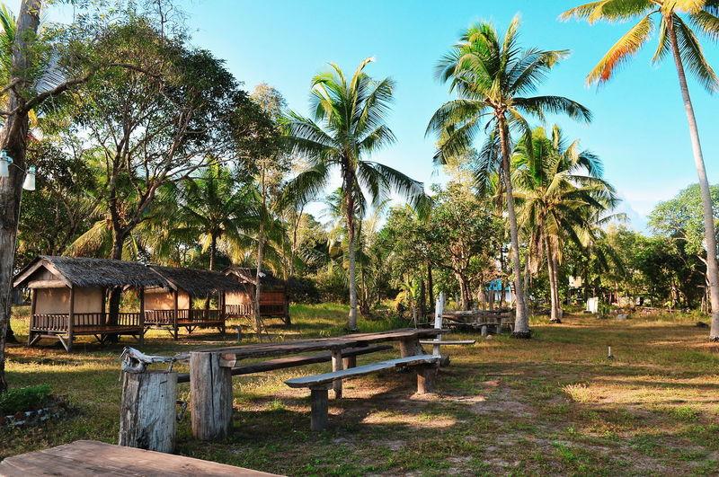 Tropical Climate Treveling Beach Tropical Paradise Bintan  Bintanisland INDONESIA Travel Destinations Destination Illustration Tree Sky Grass Beauty In Nature Scenics Idyllic