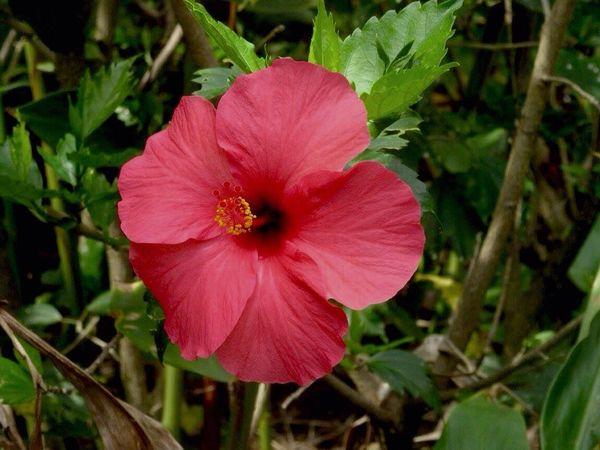 Hawiian Flowers Beautiful Hawaii