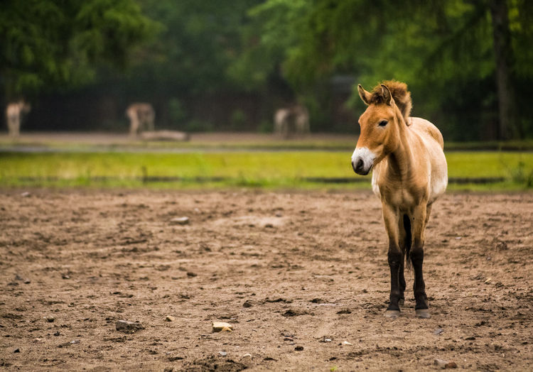 Mammal Animal Themes Animal Domestic Animals Animal Wildlife Vertebrate Domestic One Animal Pets Land Field Livestock Nature No People Focus On Foreground Horse Tree Day Looking At Camera Full Length Herbivorous