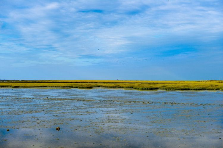 Nordseeküste Sky Cloud - Sky Environment Water Nature No People Landscape Land Scenics - Nature Blue Horizon Tranquil Scene Day Beauty In Nature Horizon Over Land Tranquility Outdoors Grass Sea Semi-arid