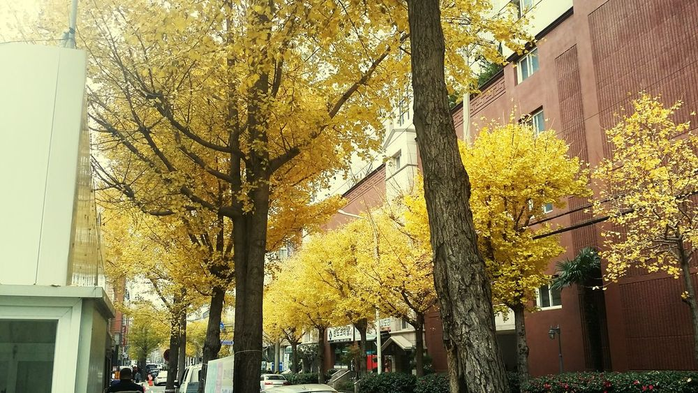 Yellow Leaf Street Trees Maidenhair Tree Rainy Day Cold Winter ❄⛄ Autumn Building Fallen Leaf Change Residential Structure Tree Trunk Branch Autumn Collection Leaf Vein Maple Fall Settlement Exterior Plant Bark Residential District Maple Leaf Office Building Maple Tree Historic Ivy Bark Treelined Woods Woodpecker Leaves