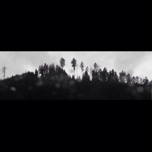 Hello World Black And White Tree My View