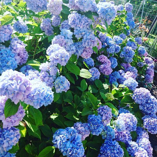 Memories of a summer soon gone Summer Flowers Purple In Bloom