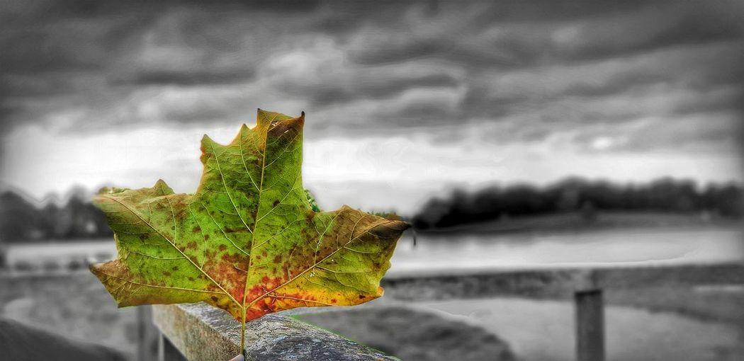 Tree Water Leaf