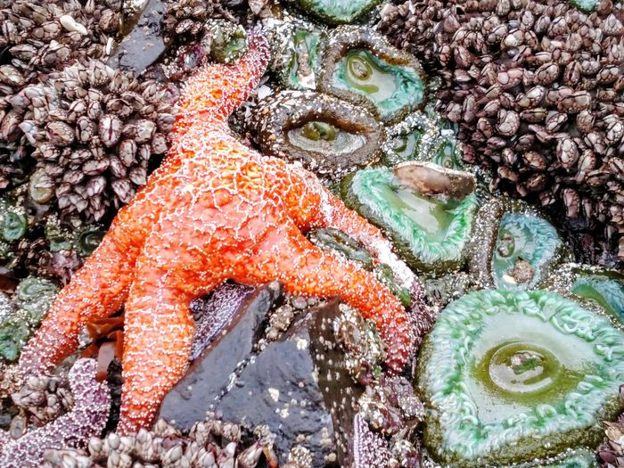 Beachlife EyeEmNewHere Starfish  Colorful Beach Walk Day No People Outdoors Water Nature Close-up Tree