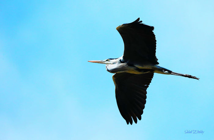 Animals In The Wild Flying Bird Animal Body Part Flying Spread Wings Day Lake Close-up Bird Photography EyeEmNewHere Water Leaf Reflection Animal Wildlife Clear Sky Perching Animal Themes One Animal Nature Outdoors No People Fish Bird First Eyeem Photo Under The Bridge Night