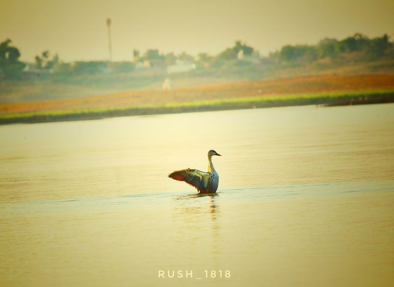 Bird Water Beauty In Nature Canonboy Rush1818