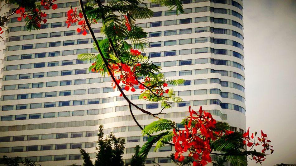 Flower, Condominium, Cheese! Open Edit. Eyeem Gallery Taking Photos.