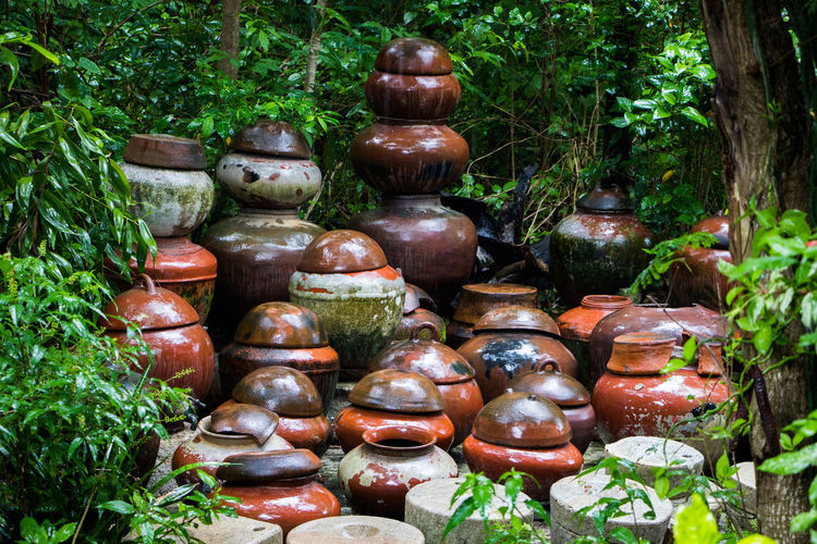 Day Forest Group Of Jar Jars  Large Group Of Objects Outdoors Water Jar Wet