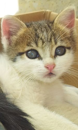 Cats Cat Eyes Cute Cats Catlover