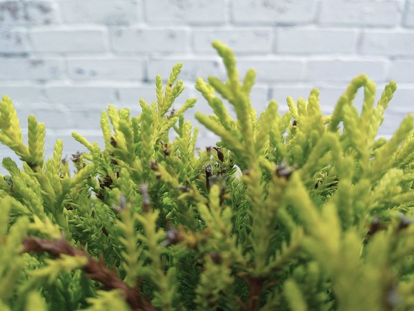 Growth Plant Selective Focus Wall - Building Feature Close-up Brick Wall Green Color Leaf Nature Stem Fragility Freshness Beauty In Nature Growing Outdoors New Life Day Botany Plant Life Springtime