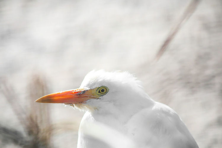 Animals In The Wild Nature Animal Themes Beatuy In Nature Bird Blurred Motion Pause White