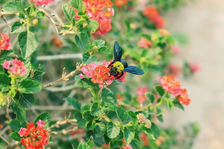 Background Texture Background Flowers Background Flower Color Background Flower Image Green Color Nature Nature Photography Naturelovers Naturephotography Flower Perching Flower Head Butterfly - Insect Leaf Insect Animal Themes Close-up Plant Flowering Plant Bee In Bloom Plant Life Bumblebee Honey Bee