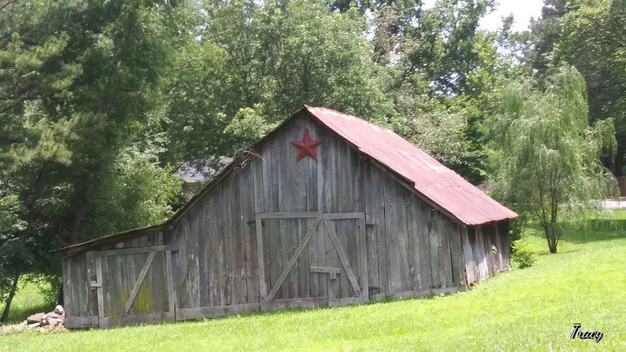 Tree Barn Field