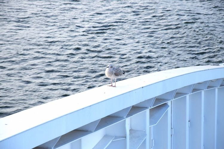Sitting Bird Animal Wildlife Birds_collection Naturelovers No People Railing _ Collection Seagull Seaside Waterfall