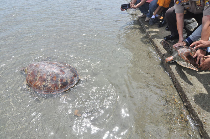 Indonesian release Sea Turtle_ Animals In The Wild Beach Day Group Of People High Angle View Leisure Activity Lifestyles Marine Men Nature One Animal Outdoors People Real People Sea Vertebrate Water Waterfront