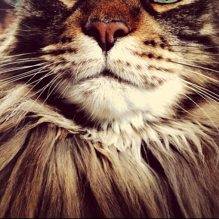 Symmetrical Cat♡ Nose