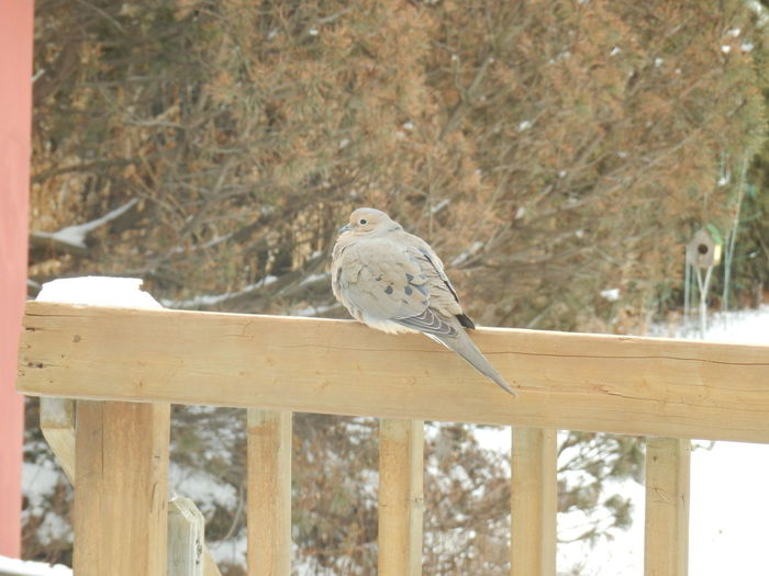 Is it really spring? Animals In The Wild Barrier Bird Boundary Close-up Fence Railing Tree Vertebrate Wood - Material
