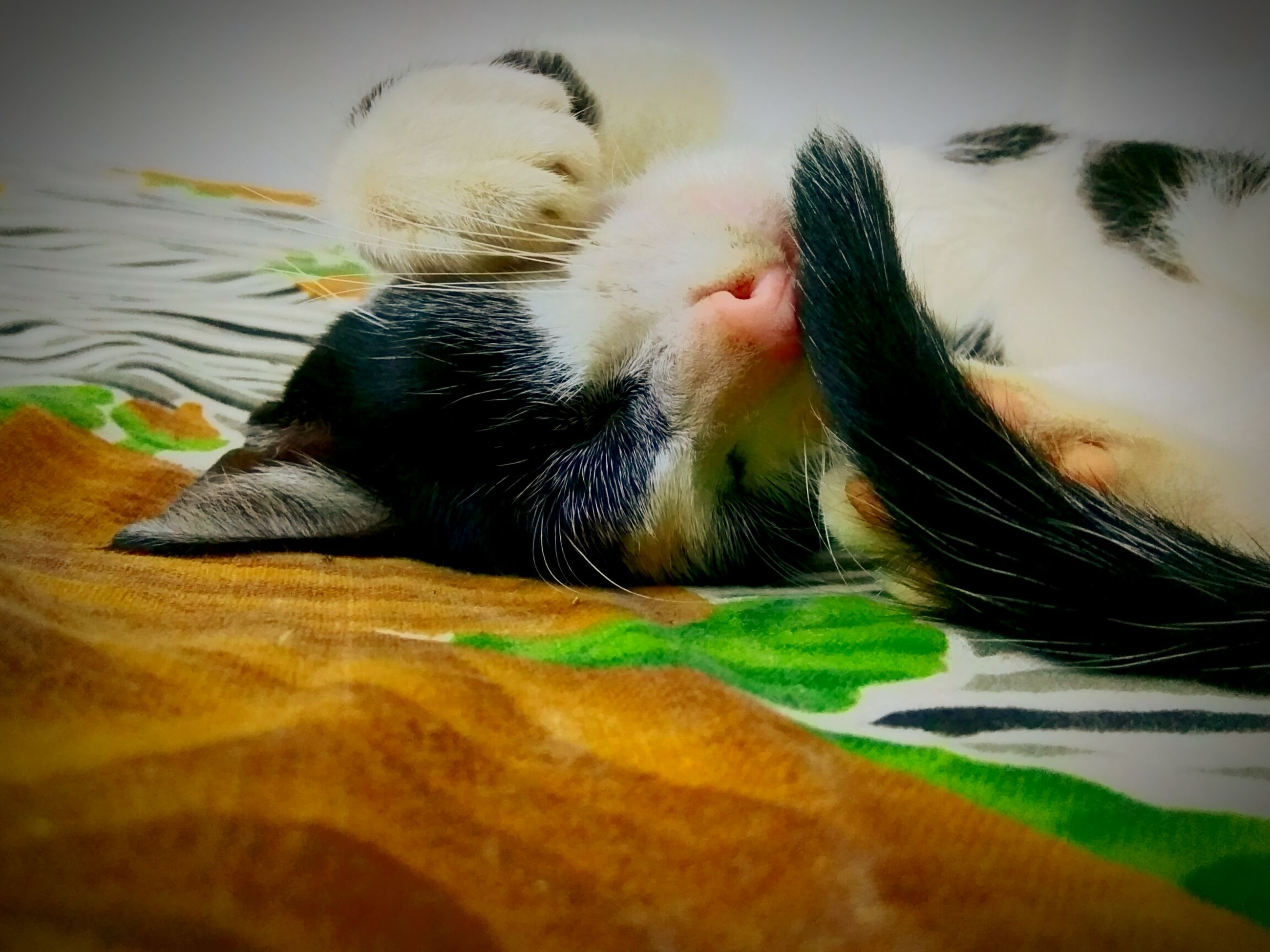 one animal, animal themes, pets, domestic animals, mammal, indoors, close-up, domestic cat, dog, animal body part, feline, selective focus, vertebrate, cat, zoology, animal, loyalty, pampered pets, animal head, relaxation, animal hair, whisker, snout, at home, no people, animal nose