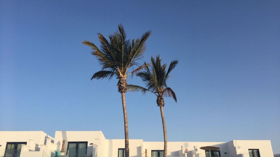 Palm Tree Clear Sky Building Exterior Blue Architecture Built Structure Tree Low Angle View Outdoors Day No People Sky