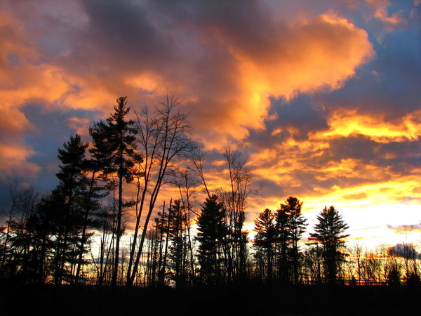 Beauty In Nature Cloud - Sky Gold Sky Nature No People Orange Clouds Orange Color Orange Sky Outdoors Scenics Silhouette Sky Sunset Sunset Sky Tranquil Scene Tranquility Tree Yellow Sky