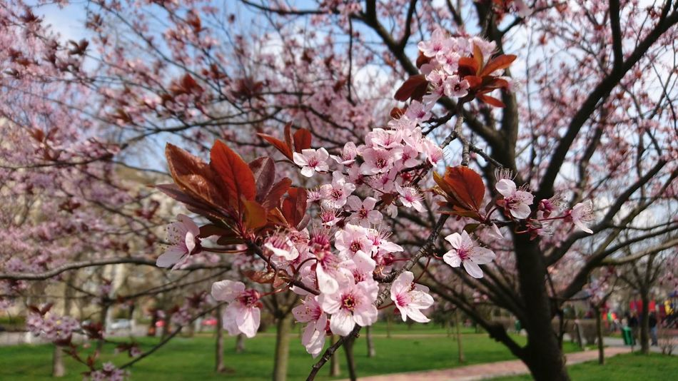 Micro Flowers Micro Photography Pink Trees Pink Flowers Cherry Flowers Cherry Tree Cherry Blossoms Flower Tree Blooming Trees Blooming Tree Blooming Springtime Spring Millennial Pink