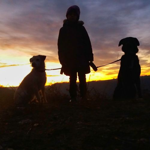 Sunset Dog Outdoors Nature Mädchen Schattenbild Abendstimmung First Eyeem Photo Abendrot Geislingen An Der Steige Kids Herbstspaziergang One Person Silhouette Landscape My Dogs Are Cooler Than Your Kids Playing With My Dog Playing With The Animals Herbstfarben Two Animals