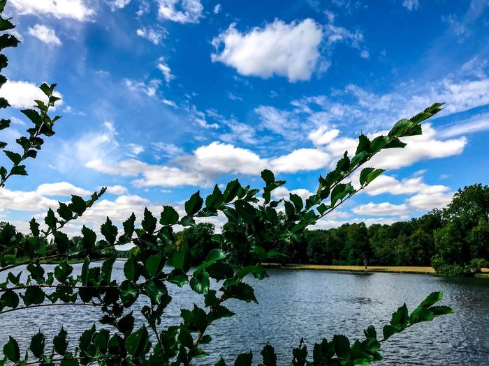 Cloud - Sky Sky Growth Nature Beauty In Nature Water Day Tree Leaf Outdoors Plant Lake No People Low Angle View Green Color Scenics Animal Themes Freshness
