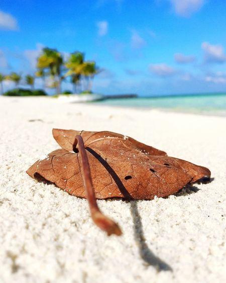 Close-up of lizard on beach against sky