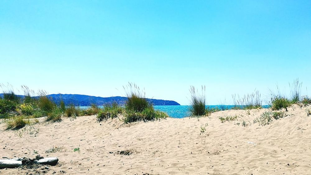 Sand Beach Sunny Nature Sky Outdoors Clear Sky Desert Blue Tranquility Sand Dune Landscape No People Scenics Day Beauty In Nature Arid Climate Tree Water 100 Days Of Summer Horizon Over Water Travel Destinations Tranquility EyeEm Selects